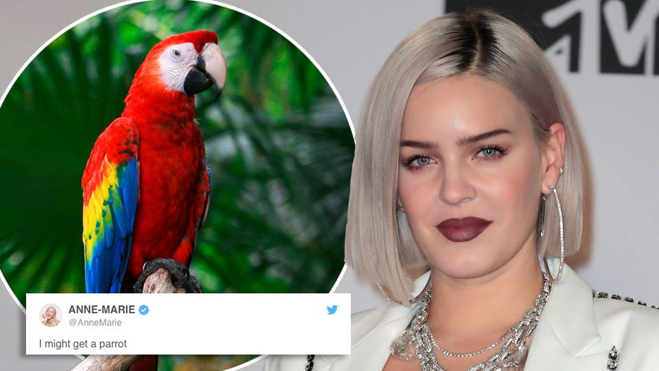 Anne-Marie talks us through her funny tweets about J-Lo, parrots and potatoes 😂