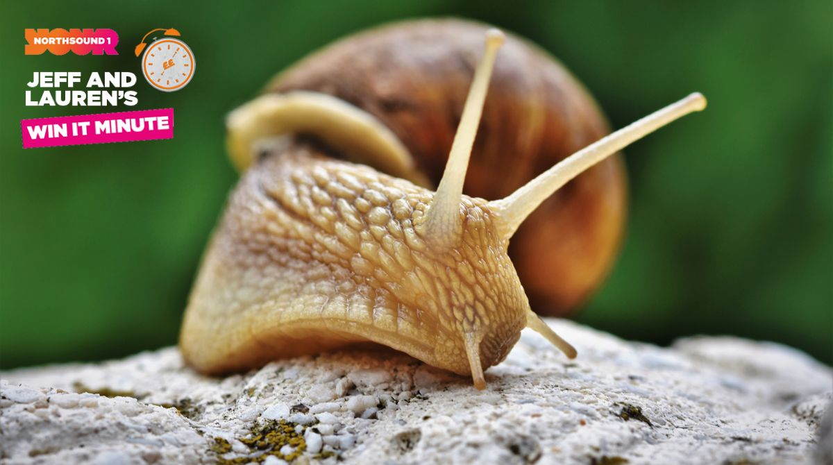 Win it Minute: True or false, snails have teeth?