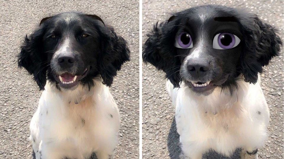 New Snapchat filter turns pet dogs into Disney characters